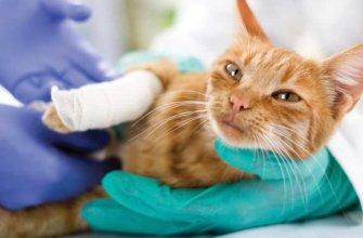 Заболевание суставов у кошек