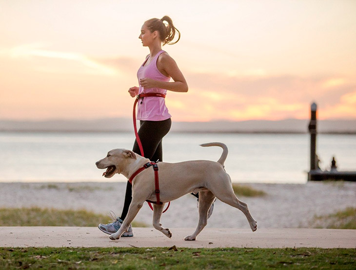 Правила выгула собак в общественном месте