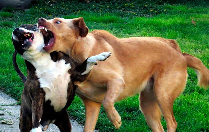 Как разнять дерущихся собак?