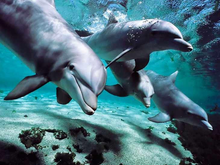 Топ - 30 интересных фактов о дельфинах