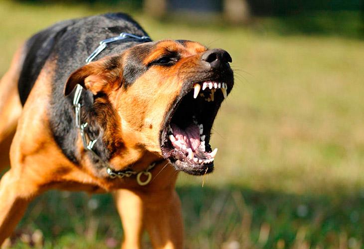 Почему собаки кусаются?