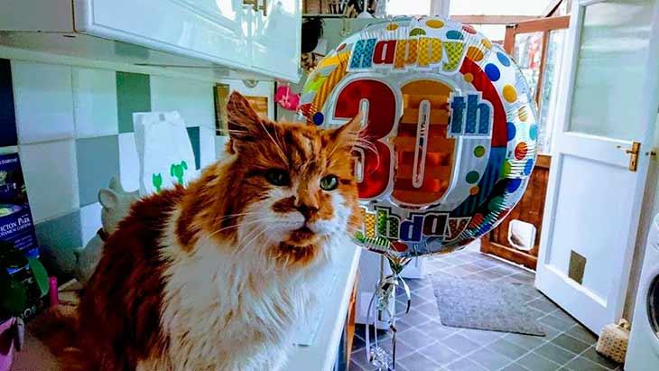 Рекорд долголетия кошки