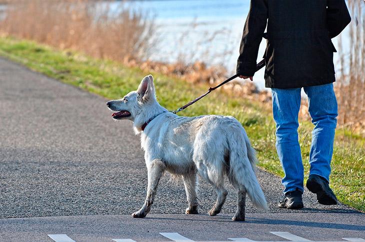 Где по закону разрешено выгуливать собаку