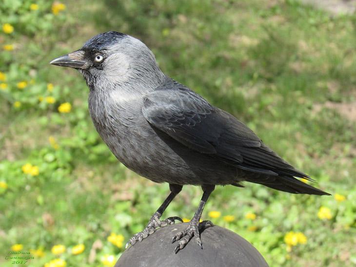 Интересные факты о птице