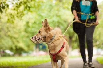 Закон о выгуле собак в 2020 году