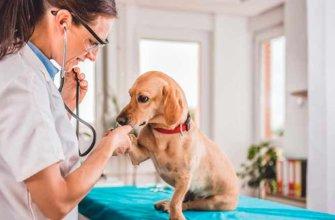 Тахикардия у собак