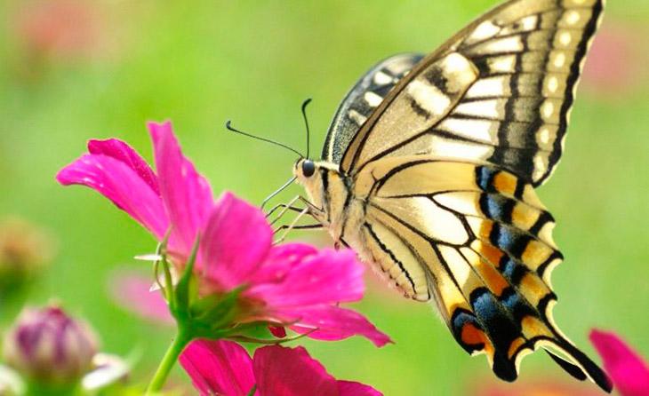 Топ - 20 интересных фактов о бабочках