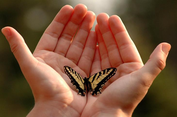 Доклад о бабочках