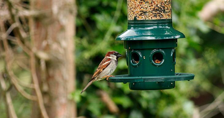 Топ - 5 универсальных советов о подкормке птиц