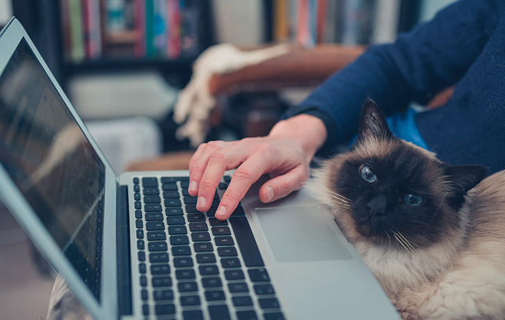 Циатыт о кошках