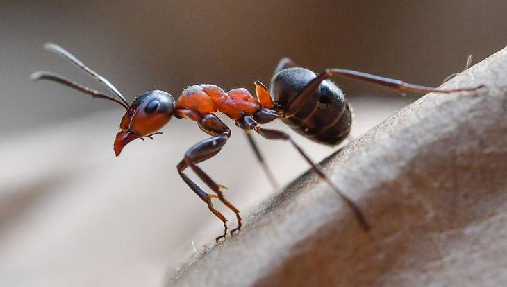 Топ - 25 интересных фактов о муравьях