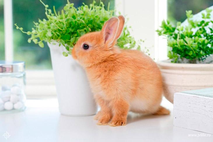 Опасные корма для декоративных кроликов