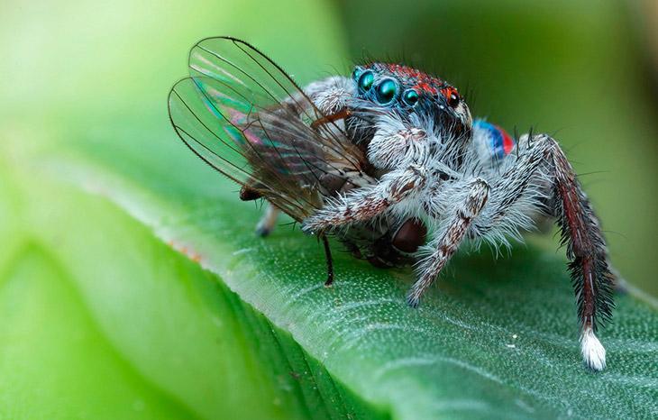 Чем питаются пауки?