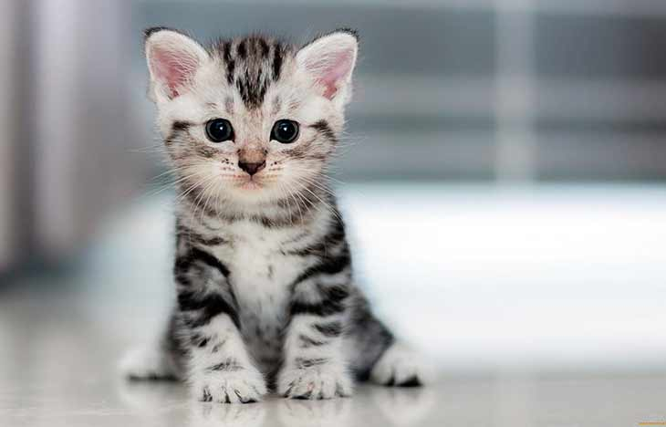 Как котёнок учится ходить?