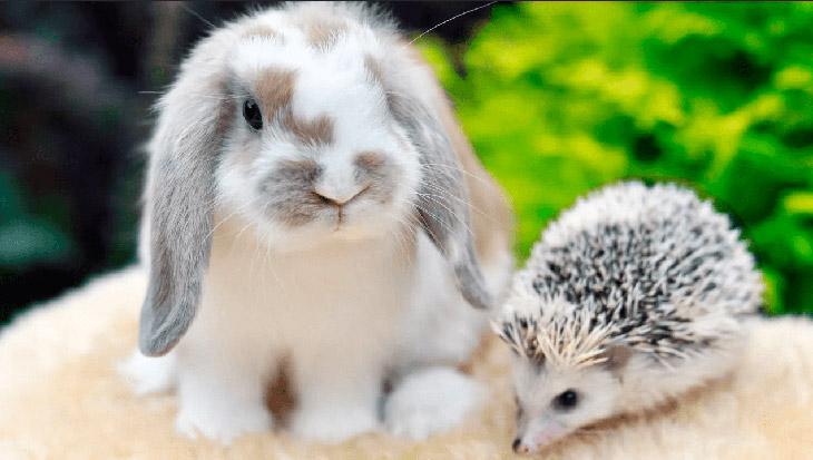 Как ухаживать за декоративным кроликом в домашних условиях?