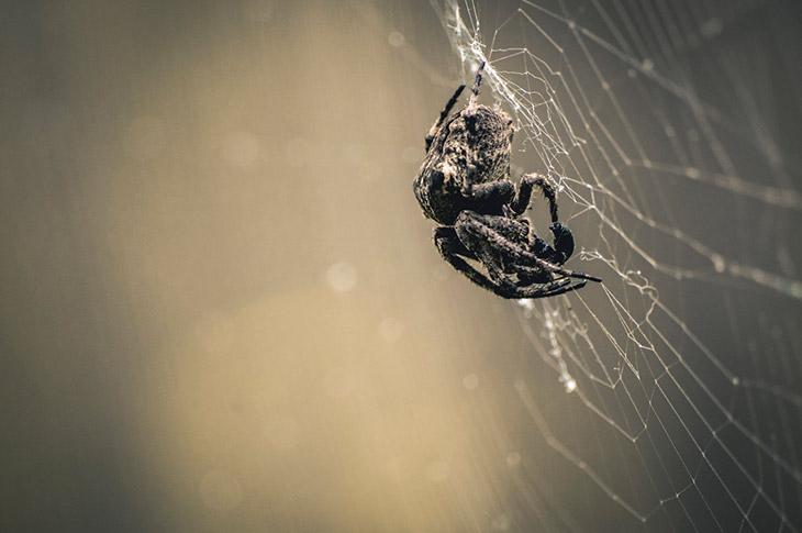 Где обитают пауки?