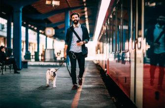 Правила перевозки животных в поезде