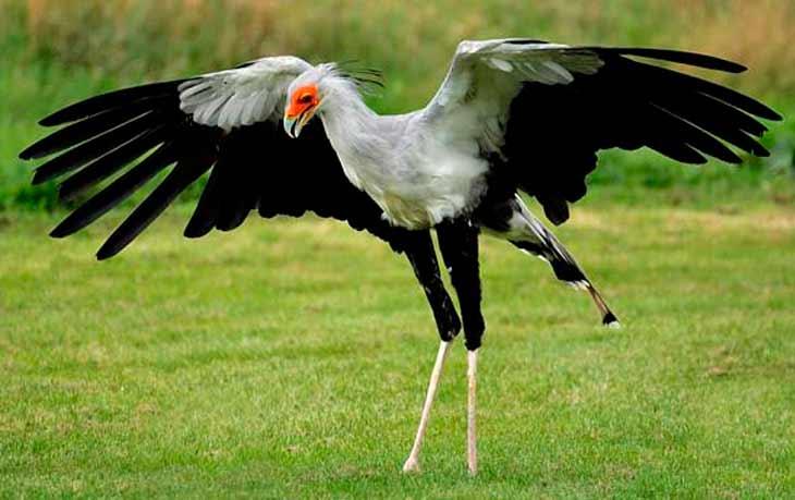 Распространение птицы