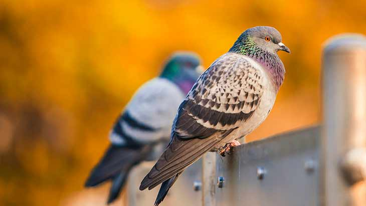 Виды голубятен