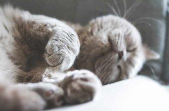 Продолжительность жизни британских кошек