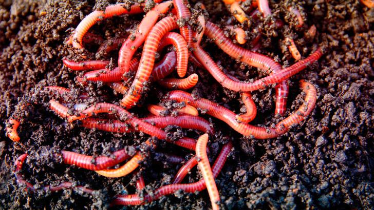 Образ жизни кольчатых червей