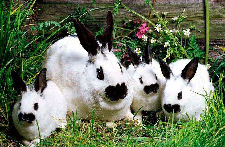 Разводить кроликов