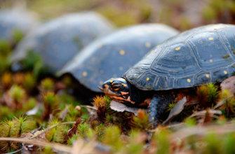 Топ 40 интересных фактов о черепахах