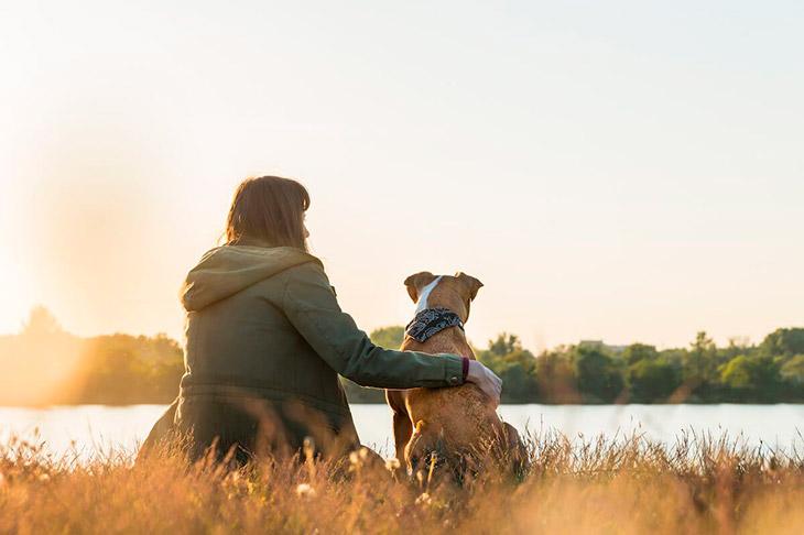 Поговорки про собаку