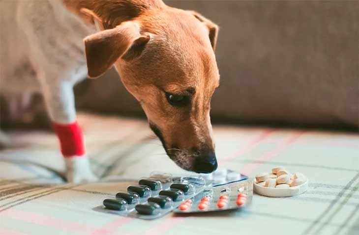 Лечение анемии у животных