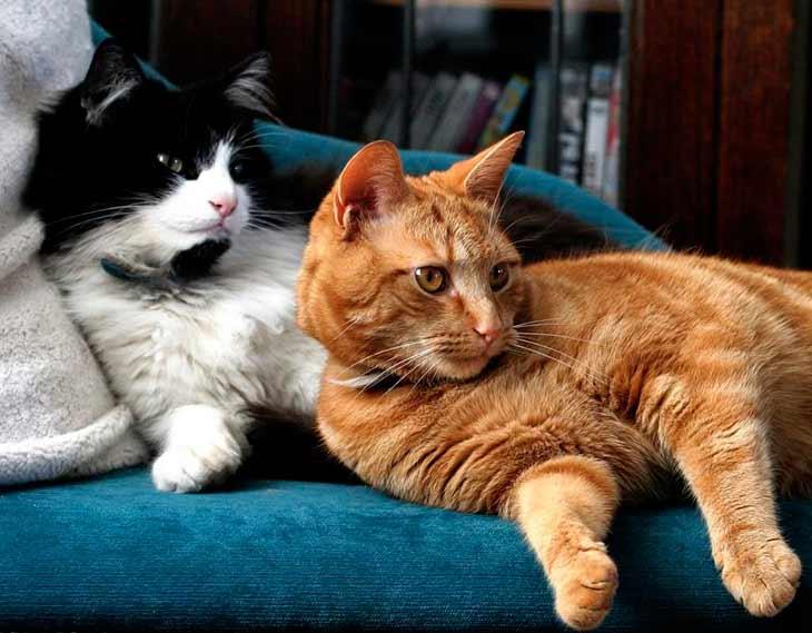Факторы, влияющие на половое созревание кошки