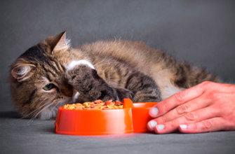 Причины отказа кошки от еды