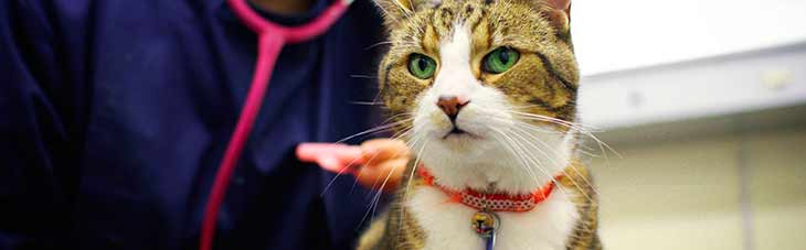 Диагностика рака у кошек и котов