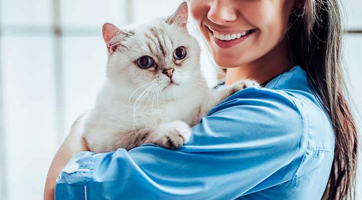 Лечение рака у кошек и котов