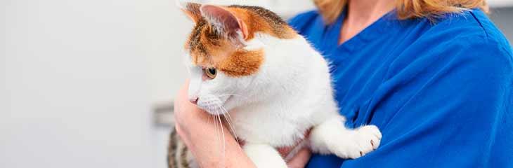 Что такое рак, что его провоцирует и как он возникает у кошек и котов?