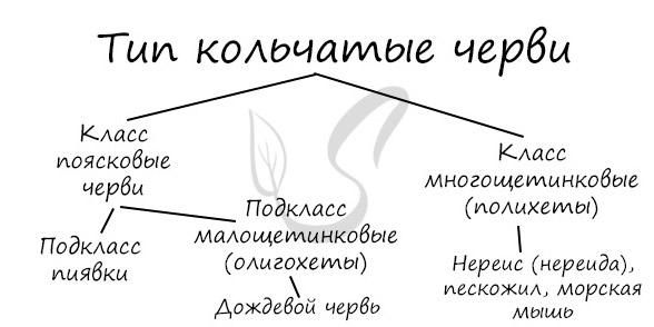 Классификация кольчатых червей
