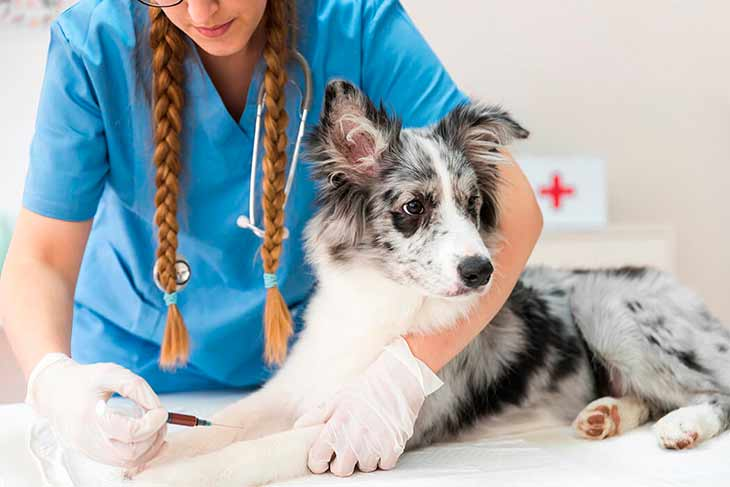 Что такое анемия и как лечить у собак?