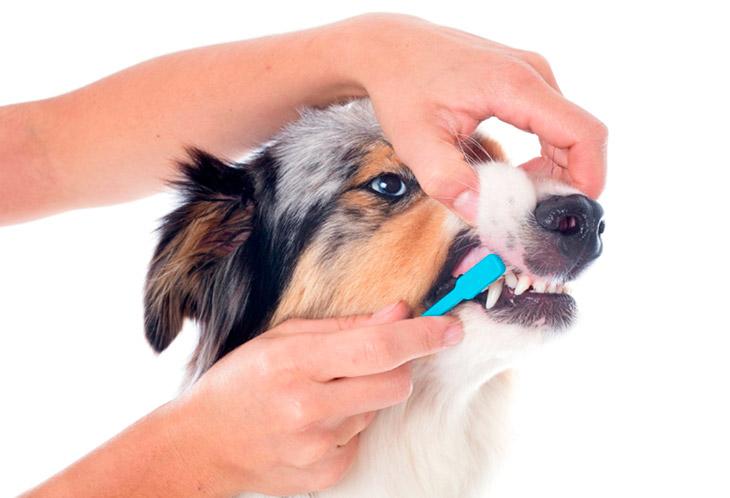 Как часто нужно чистить зубы собаке?