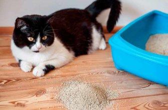 Симптомы черный кал у кошки