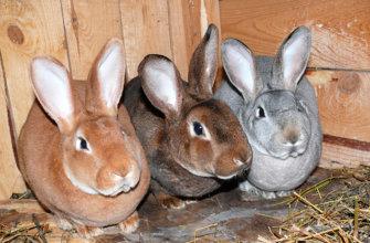 История кролика Рекс