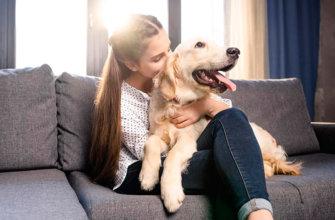 Топ 30 интересных фактов о домашних животных