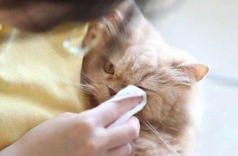 Гигиена глаз у кошек