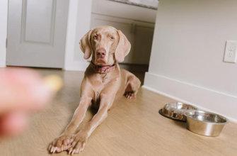 Давать витамины собаке