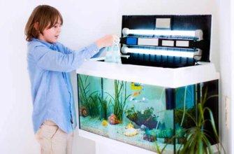 Что нужно для появления рыбок в доме?