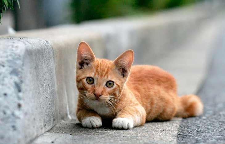Выбираем имя для рыжего котенка мальчика