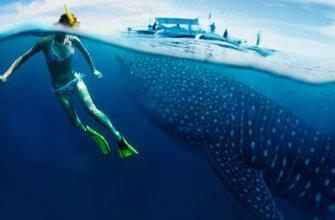 Топ-5 самых крупных рыб в океане