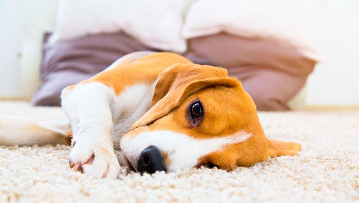 Инсульт у пса