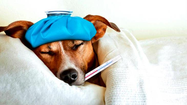 Что такое насморк у собак?