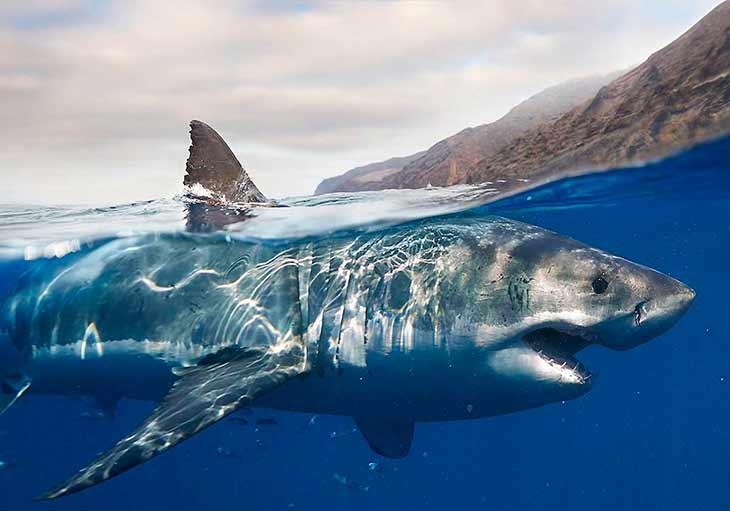 Где обитают акулы?