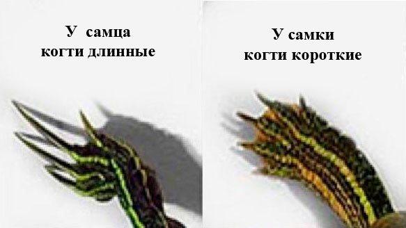 Длина когтей