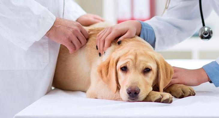 Симптомы гастрита у собаки